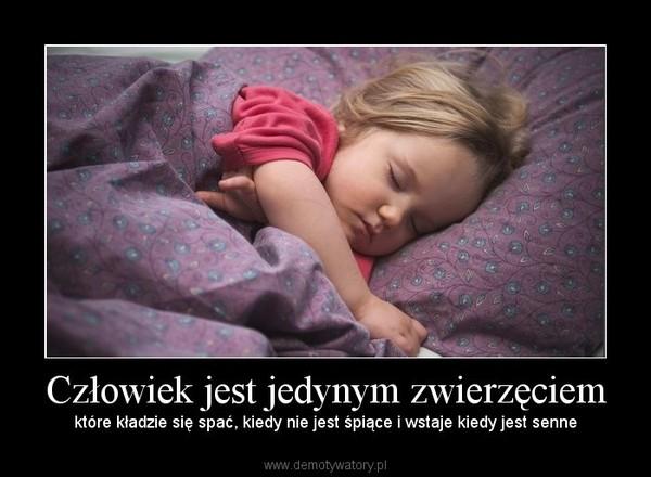 Człowiek jest jedynym zwierzęciem – które kładzie się spać, kiedy nie jest śpiące i wstaje kiedy jest senne