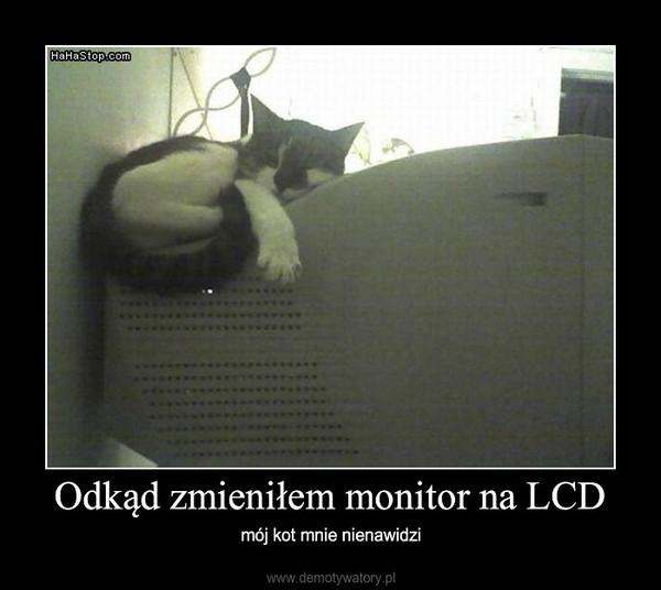 Odkąd zmieniłem monitor na LCD – mój kot mnie nienawidzi