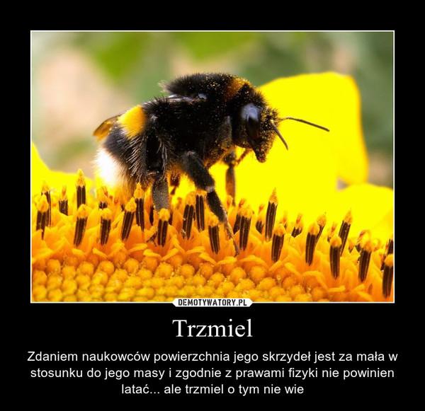Trzmiel – Zdaniem naukowców powierzchnia jego skrzydeł jest za mała w stosunku do jego masy i zgodnie z prawami fizyki nie powinien latać... ale trzmiel o tym nie wie