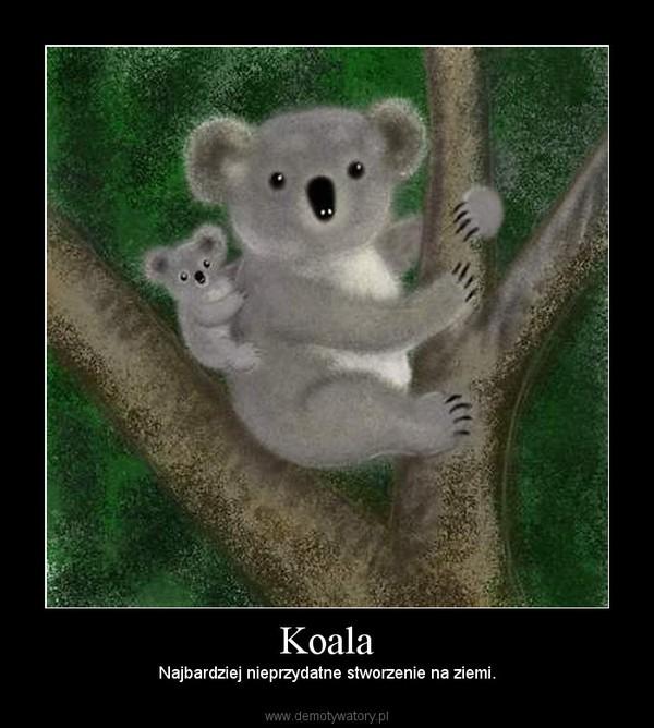 Koala – Najbardziej nieprzydatne stworzenie na ziemi.