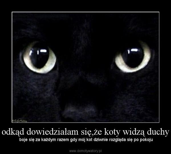odkąd dowiedziałam się,że koty widzą duchy –  boje się za każdym razem gdy mój kot dziwnie rozgląda się po pokoju