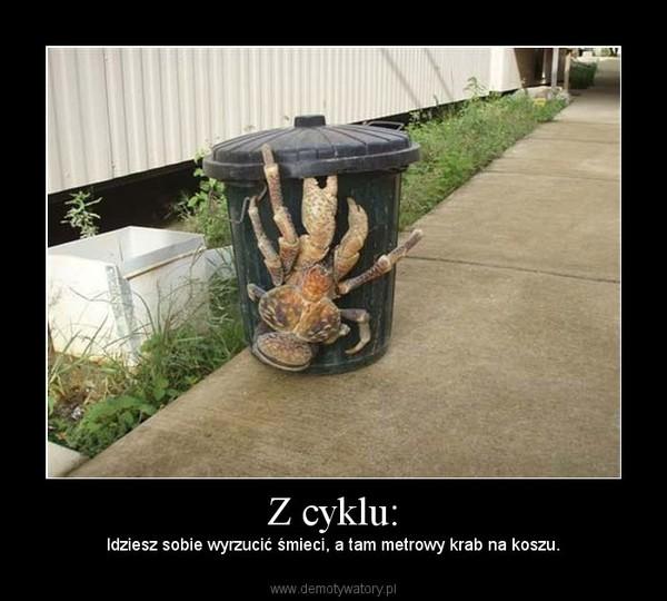 Z cyklu: – Idziesz sobie wyrzucić śmieci, a tam metrowy krab na koszu.