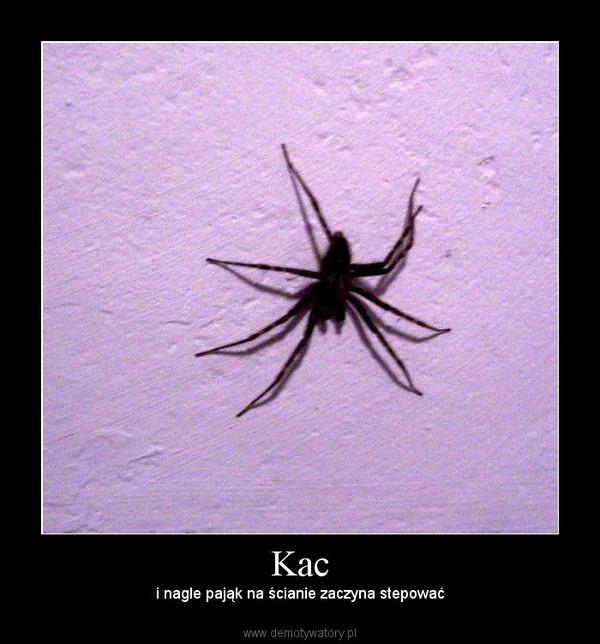 Kac – i nagle pająk na ścianie zaczyna stepować