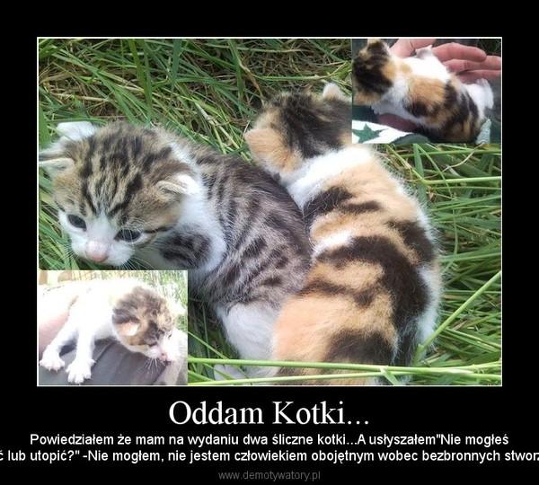Poważnie Oddam Kotki... – Demotywatory.pl KQ55