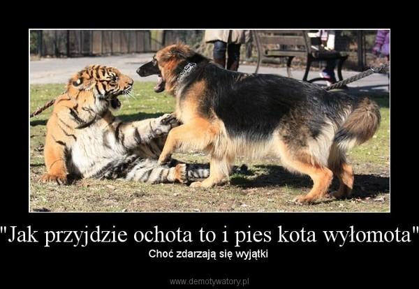 Jak Przyjdzie Ochota To I Pies Kota Wyłomota Demotywatorypl
