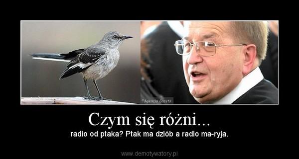 Czym się różni... – radio od ptaka? Ptak ma dziób a radio ma-ryja.