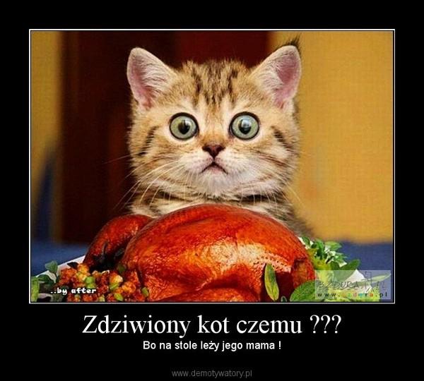 Zdziwiony Kot Czemu Demotywatorypl