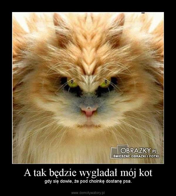 A Tak Będzie Wygladał Mój Kot Demotywatorypl
