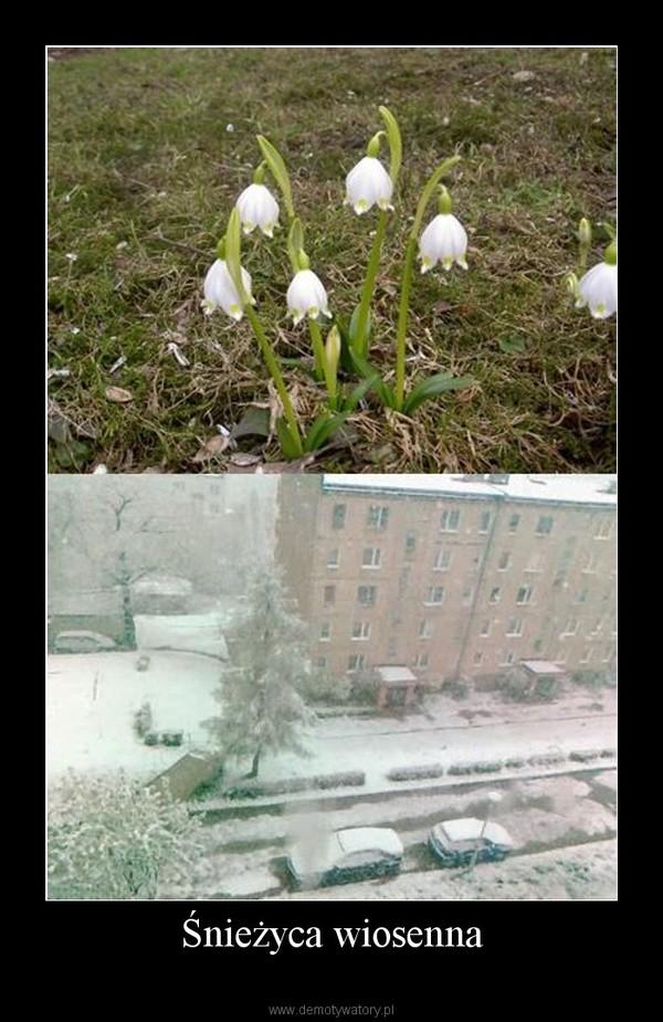 Śnieżyca wiosenna –