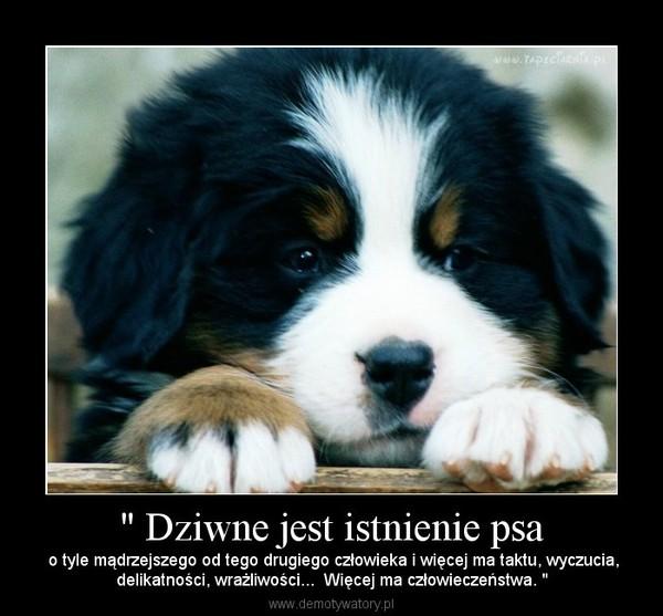 """"""" Dziwne jest istnienie psa – o tyle mądrzejszego od tego drugiego człowieka i więcej ma taktu, wyczucia,delikatności, wrażliwości...  Więcej ma człowieczeństwa. """""""
