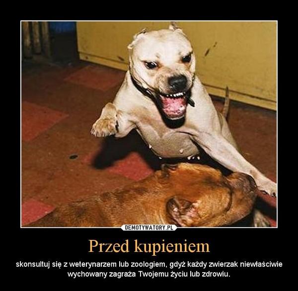 Przed kupieniem – skonsultuj się z weterynarzem lub zoologiem, gdyż każdy zwierzak niewłaściwie wychowany zagraża Twojemu życiu lub zdrowiu.