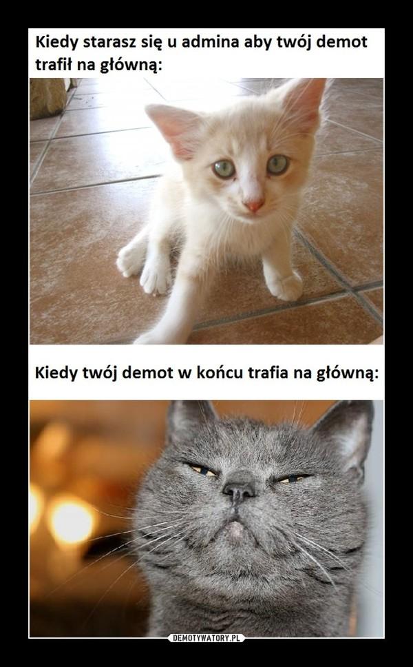 Przyczyna sukcesu kotków –