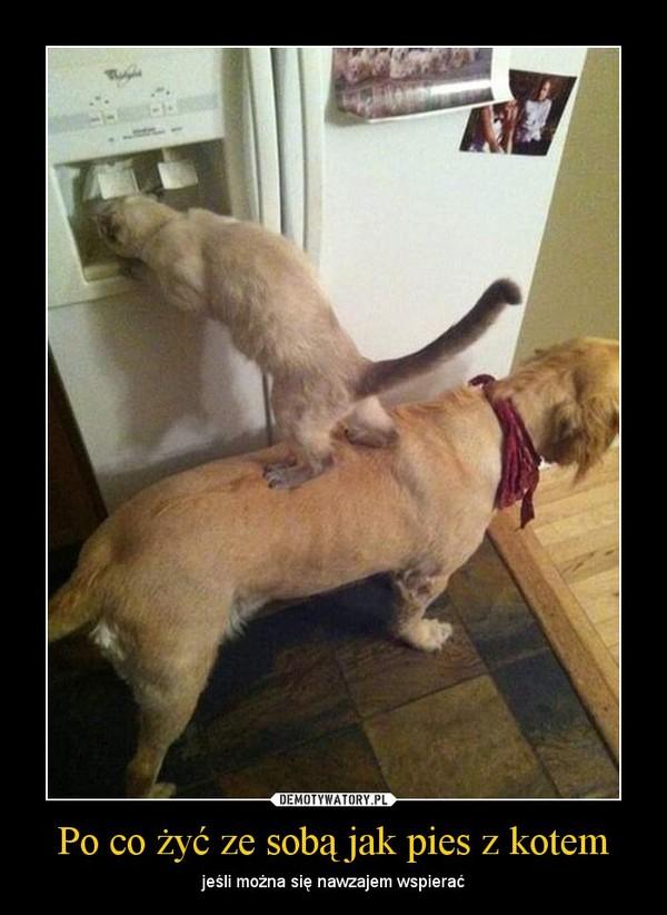 Po co żyć ze sobą jak pies z kotem – jeśli można się nawzajem wspierać
