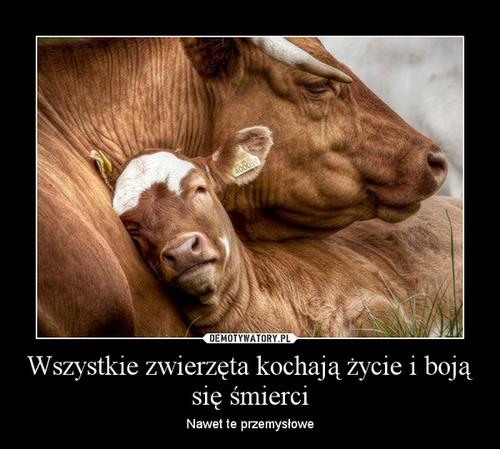Wszystkie zwierzęta kochają życie i boją się śmierci