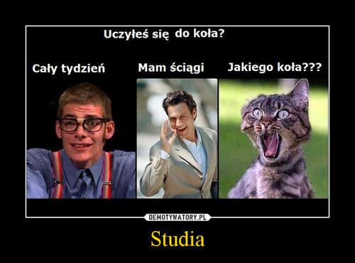 Studia