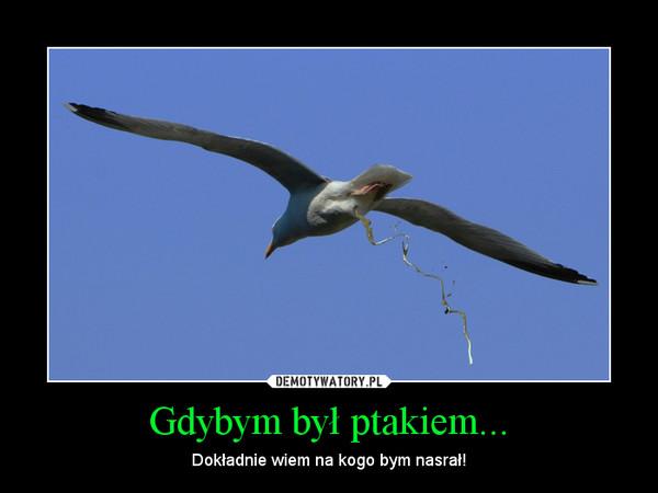 Gdybym był ptakiem... – Dokładnie wiem na kogo bym nasrał!