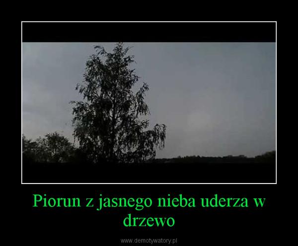 Piorun z jasnego nieba uderza w drzewo –