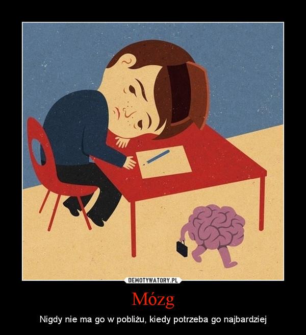 Mózg – Nigdy nie ma go w pobliżu, kiedy potrzeba go najbardziej