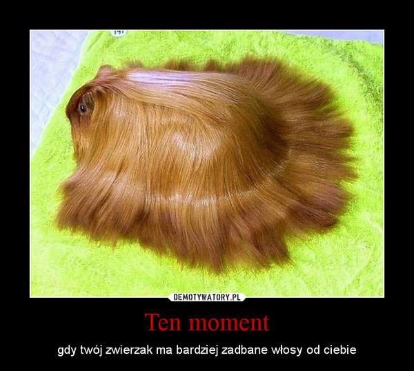 Ten moment – gdy twój zwierzak ma bardziej zadbane włosy od ciebie