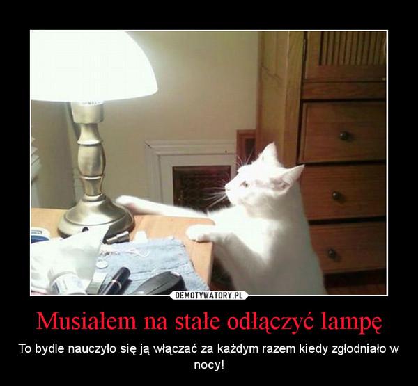 Musiałem na stałe odłączyć lampę – To bydle nauczyło się ją włączać za każdym razem kiedy zgłodniało w nocy!