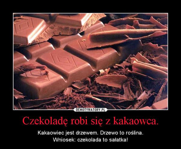 Czekoladę robi się z kakaowca. – Kakaowiec jest drzewem. Drzewo to roślina.Wniosek: czekolada to sałatka!