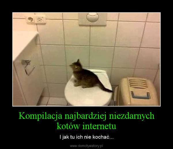 Kompilacja najbardziej niezdarnych kotów internetu – I jak tu ich nie kochać...