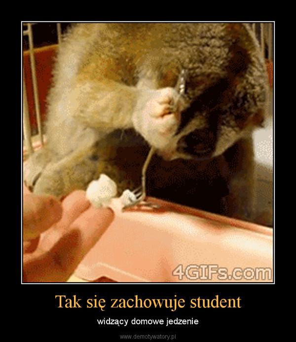 Tak się zachowuje student – widzący domowe jedzenie