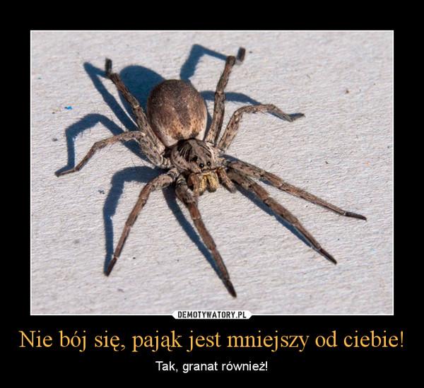 Nie bój się, pająk jest mniejszy od ciebie! – Tak, granat również!