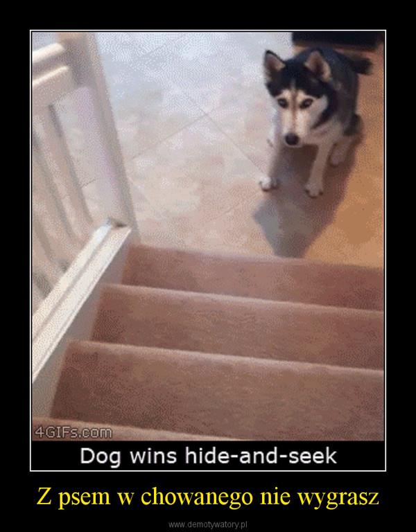 Z psem w chowanego nie wygrasz –