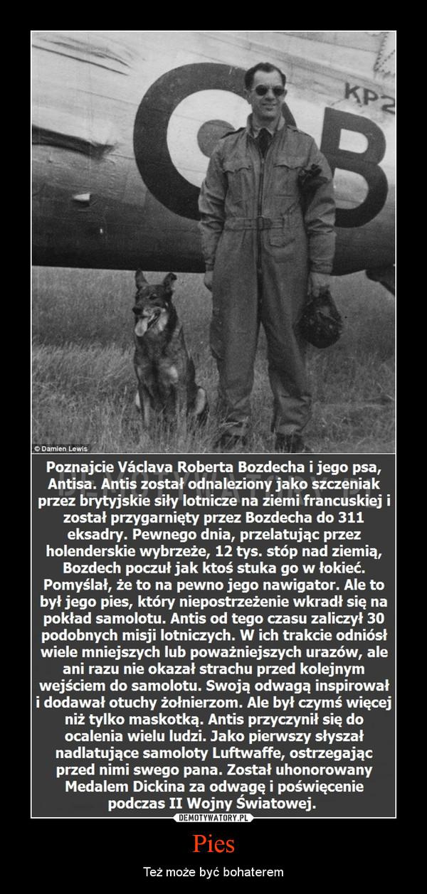 Pies – Też może być bohaterem