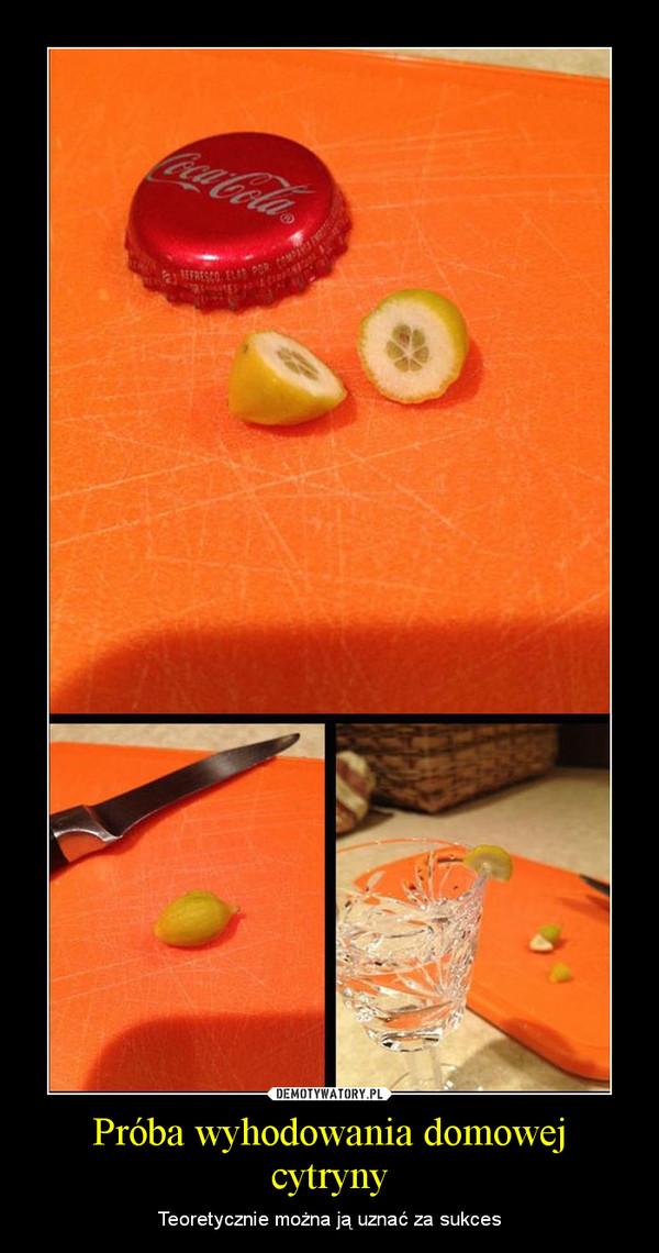 Próba wyhodowania domowej cytryny – Teoretycznie można ją uznać za sukces