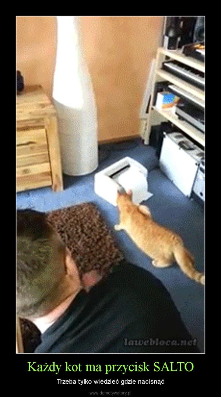 Każdy kot ma przycisk SALTO – Trzeba tylko wiedzieć gdzie nacisnąć