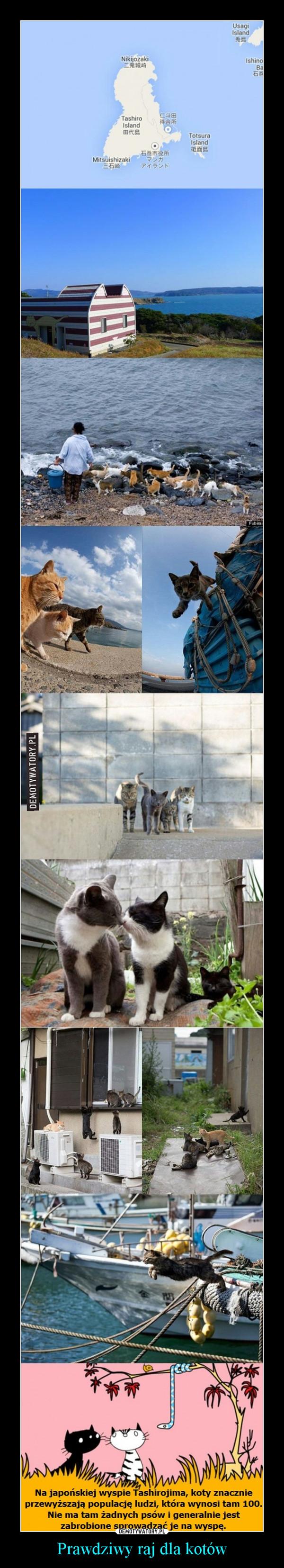 Prawdziwy raj dla kotów –