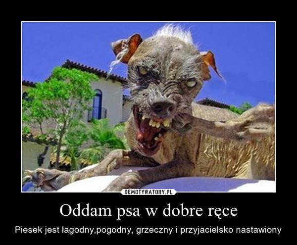 Poważnie Oddam psa w dobre ręce – Demotywatory.pl VH42