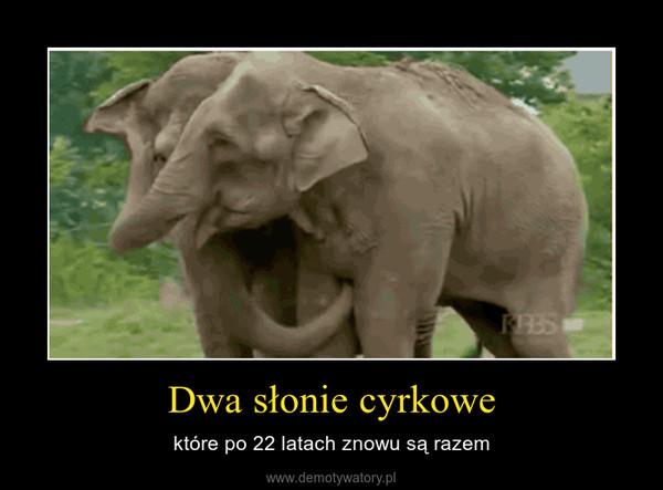 Dwa słonie cyrkowe – które po 22 latach znowu są razem
