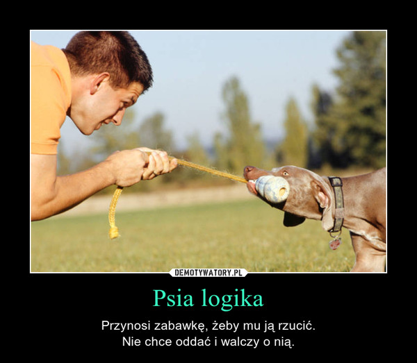 Psia logika – Przynosi zabawkę, żeby mu ją rzucić.Nie chce oddać i walczy o nią.
