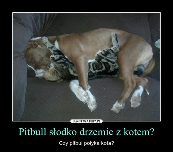 Pitbull słodko drzemie z kotem? – Czy pitbul połyka kota?