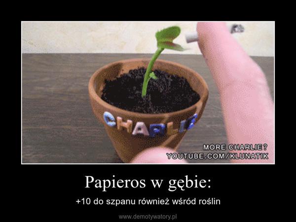 Papieros w gębie: – +10 do szpanu również wśród roślin
