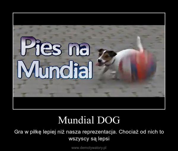 Mundial DOG – Gra w piłkę lepiej niż nasza reprezentacja. Chociaż od nich to wszyscy są lepsi