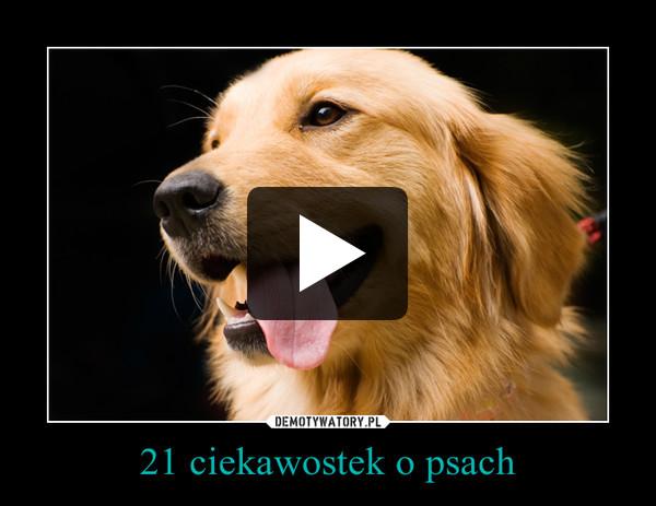 21 ciekawostek o psach –