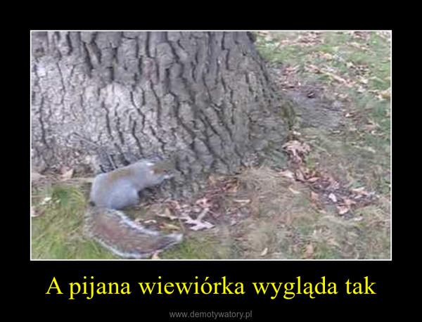 A pijana wiewiórka wygląda tak –
