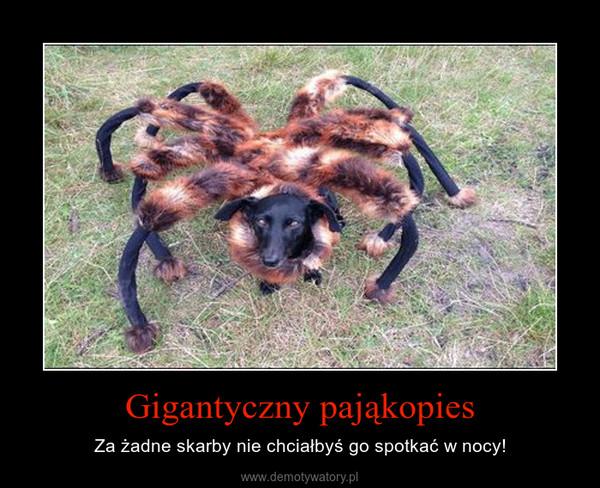 Gigantyczny pająkopies – Za żadne skarby nie chciałbyś go spotkać w nocy!