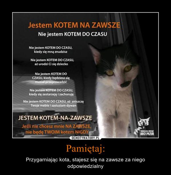 Pamiętaj: – Przygarniając kota, stajesz się na zawsze za niego odpowiedzialny