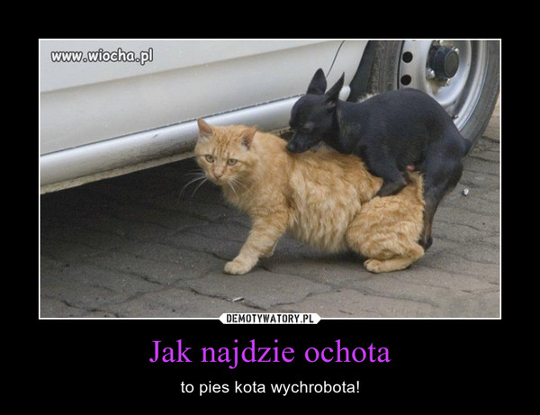 Jak najdzie ochota – to pies kota wychrobota!