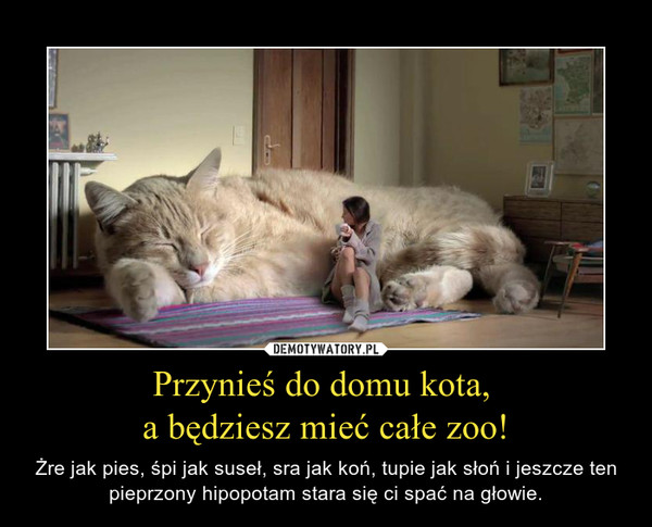 Przynieś do domu kota, a będziesz mieć całe zoo! – Żre jak pies, śpi jak suseł, sra jak koń, tupie jak słoń i jeszcze ten pieprzony hipopotam stara się ci spać na głowie.
