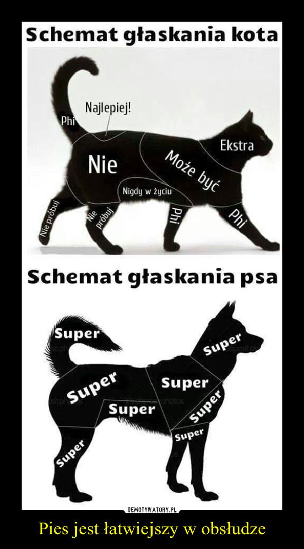 Pies jest łatwiejszy w obsłudze –