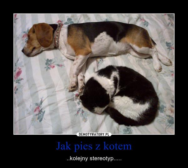 Jak pies z kotem – ..kolejny stereotyp.....