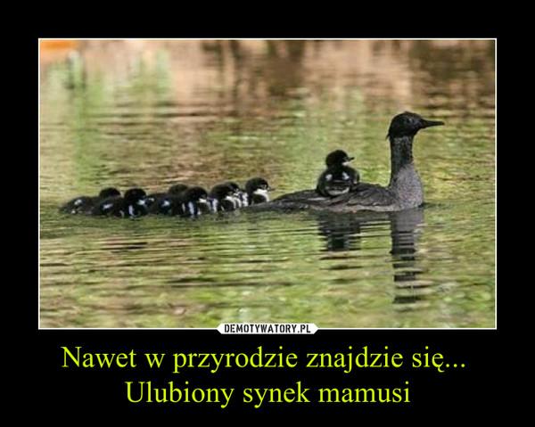 Nawet w przyrodzie znajdzie się... Ulubiony synek mamusi –