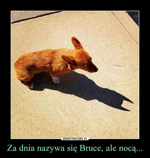 Za dnia nazywa się Bruce, ale nocą... –