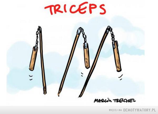 Triceps –